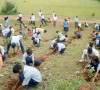 bhuni-plantation-by-ksms-students